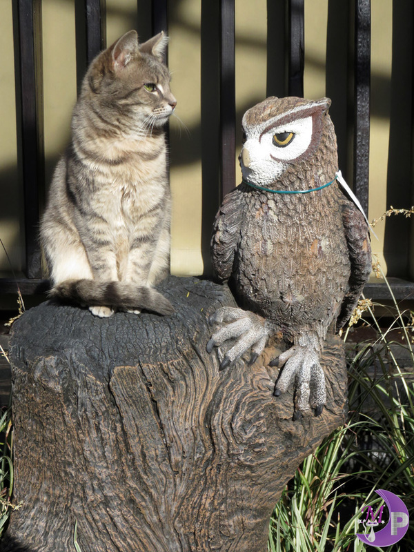 Owl and Pussycat photo by Diane Langenstrass