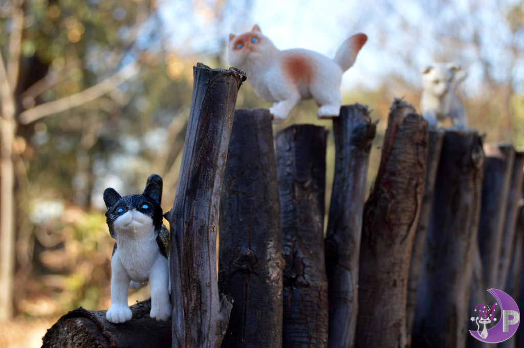 Cats on wooden fence